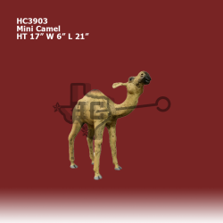 Mini-Camel-color