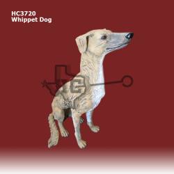 whippet-Dog-color